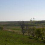 SHF pasture